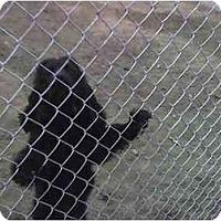Adopt A Pet :: ANGUS - Fowler, CA