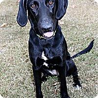 Adopt A Pet :: Magpie - Marietta, GA