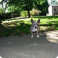Adopt A Pet :: Frankie - Mount Gretna, PA