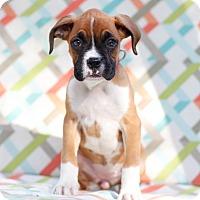 Adopt A Pet :: Baby - Loomis, CA