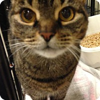Adopt A Pet :: Francis - Sewaren, NJ