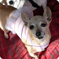 Adopt A Pet :: Gypsy - Mesa, AZ