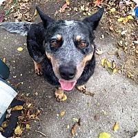 Adopt A Pet :: Demsey - New Baltimore, MI