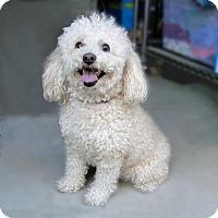 Adopt A Pet :: Skyla - Walnut Creek, CA