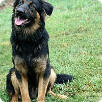 Adopt A Pet :: URGENT - Max - Caledon, ON