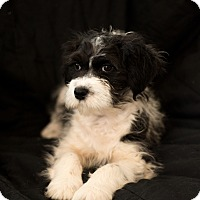 Adopt A Pet :: Tina - Daleville, AL