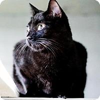 Adopt A Pet :: Midnight - Savannah, GA
