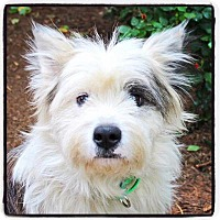 Adopt A Pet :: Matthew - Atlanta, GA