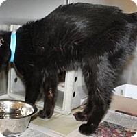Adopt A Pet :: Bernie (foster care) - Philadelphia, PA