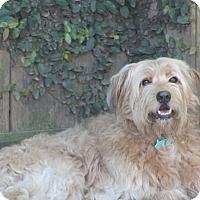 Adopt A Pet :: Sammie - Woonsocket, RI