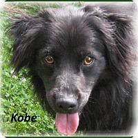Adopt A Pet :: Kobe- Super Sweet Dog! - Marlborough, MA