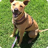 Adopt A Pet :: Charlie Jean - Sacramento, CA