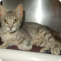 Adopt A Pet :: Celeste - Newport, NC