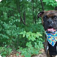 Adopt A Pet :: Fudgie - New Castle, PA
