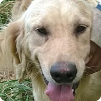 Adopt A Pet :: Nate - Courtesy Posting - New Canaan, CT