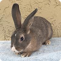 Adopt A Pet :: Ash - Bonita, CA
