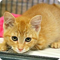 Adopt A Pet :: Surfside - Killeen, TX