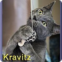 Adopt A Pet :: Kravitz - Aldie, VA