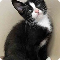 Adopt A Pet :: Sam - Oswego, IL