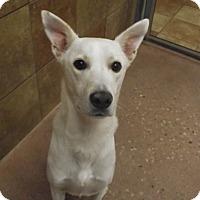 Husky/German Shepherd Dog Mix Dog for adoption in Appleton, Wisconsin - Blake