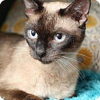 Adopt A Pet :: Sasha $45 Female - knoxville, TN