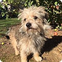 Adopt A Pet :: FYTCH - Elk Grove, CA