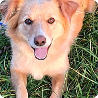 Adopt A Pet :: OLLIE(LOVES HIS FAMILY!!) - Wakefield, RI
