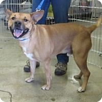 Adopt A Pet :: FLETCHER - Albany, NY