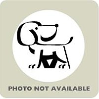 Adopt A Pet :: Lilly - Titusville, FL