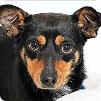 Adopt A Pet :: Bub - San Luis Obispo, CA