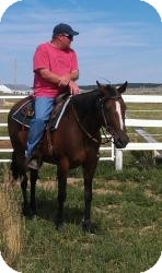 Thoroughbred for adoption in Black Forest, Colorado - Lizzy TB Mare