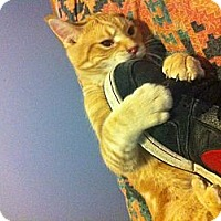 Adopt A Pet :: Rocket (DJ) - Pittstown, NJ