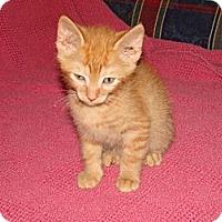 Adopt A Pet :: Scotch (Scotty) - Spotsylvania, VA