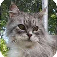 Adopt A Pet :: Queen Andromeda - Davis, CA