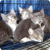 Adopt A Pet :: Nona - Mobile, AL