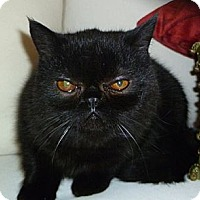 Adopt A Pet :: Timba - Beverly Hills, CA