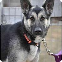 Adopt A Pet :: Freya - Hamilton, MT