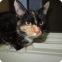 Adopt A Pet :: Bandit - Medina, OH