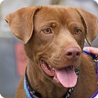 Adopt A Pet :: April - Knoxville, TN
