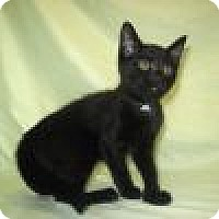 Adopt A Pet :: Polly - Powell, OH