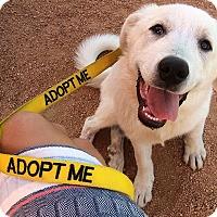 Adopt A Pet :: Nola - Austin, TX