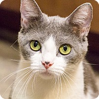 Adopt A Pet :: Larkspur - Chicago, IL