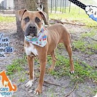 Adopt A Pet :: Hunk - Ft. Lauderdale, FL
