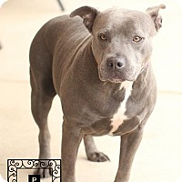 Adopt A Pet :: Spotsylvania Shelter #15-2152 Diamond - Fredericksburg, VA