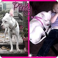 Adopt A Pet :: Pinky - Rockaway, NJ