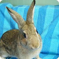Adopt A Pet :: Nestle - Harrisburg, PA