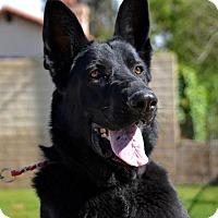 Adopt A Pet :: Blu - Irvine, CA