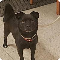 Adopt A Pet :: Skippy - Morganville, NJ