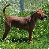 Adopt A Pet :: Charlotte - Joliet, IL