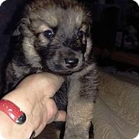 Adopt A Pet :: Bentley - Charlestown, RI
